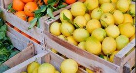الأردن يقيّد دخول المنتجات الزراعية المنافسة ...