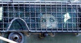 """""""هيئة الأسرى"""": ظروف اعتقال وتحقيق وحشية تتعرض لها الأسيرات في """"الدامون"""""""